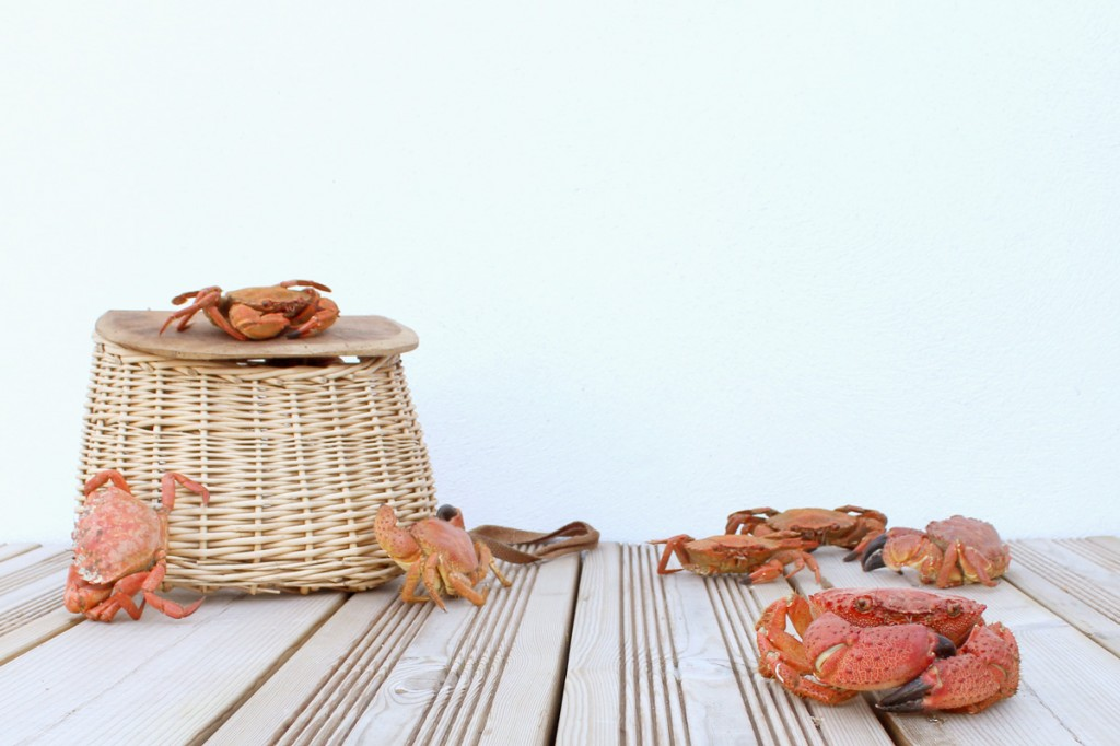 crabes, A l'attaque