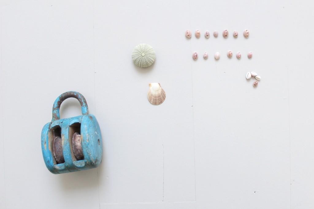 Collection, petits trésors de plage, coquillages