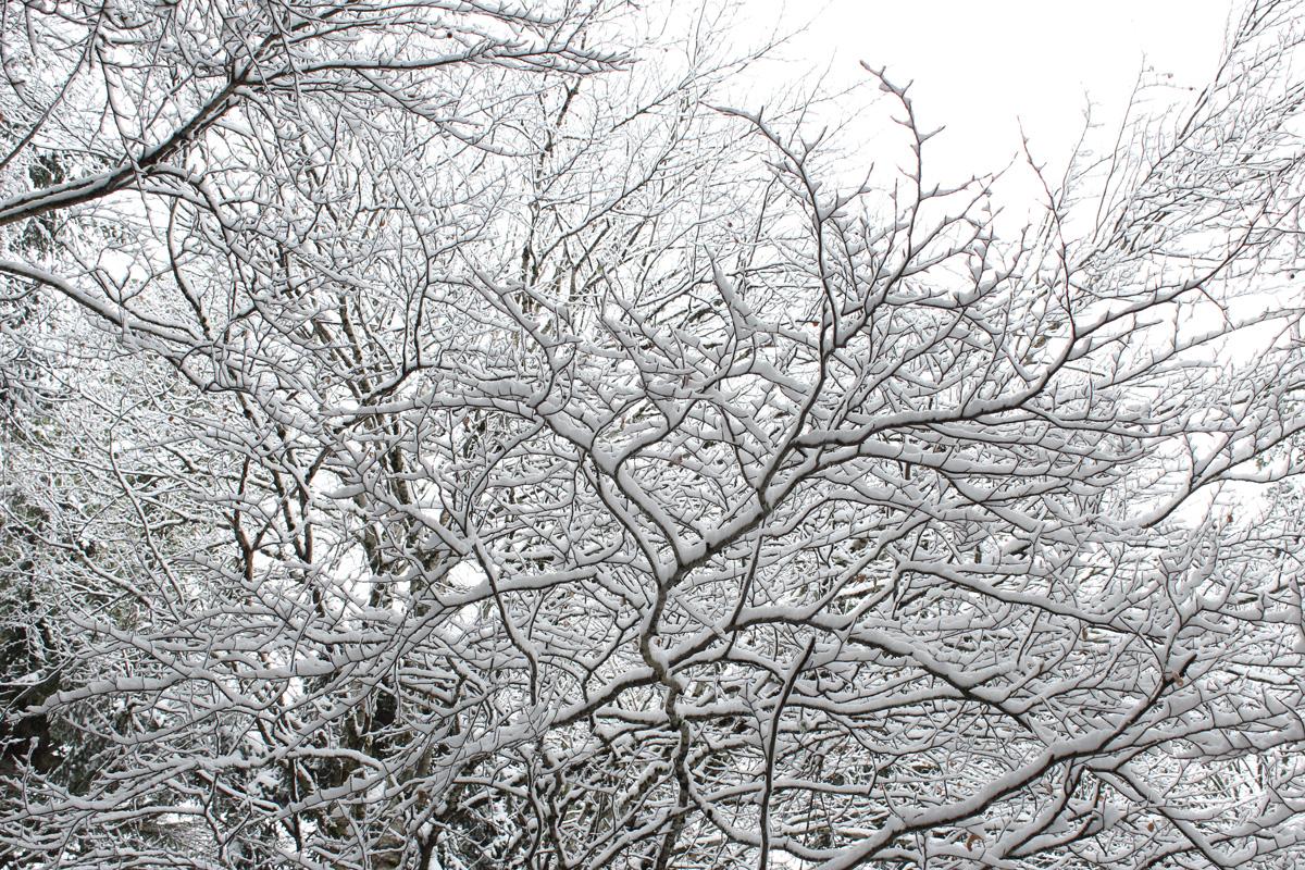 neige sur les branches