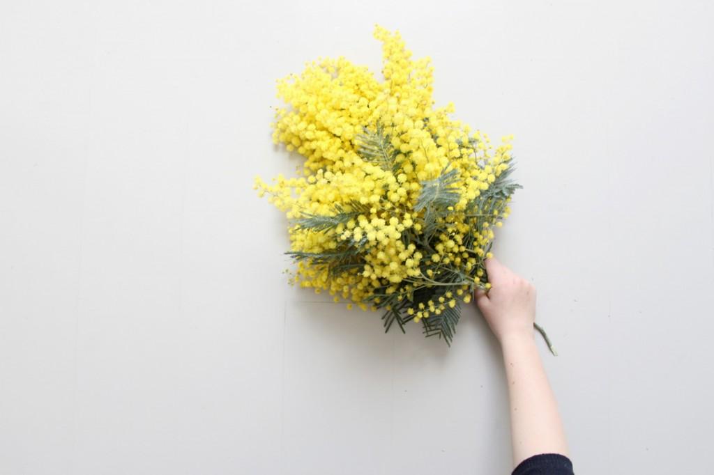 Mimosa, petites mains