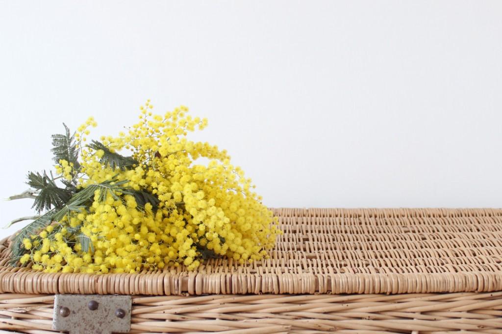 Mimosa, malle en osier, avant goût de printemps
