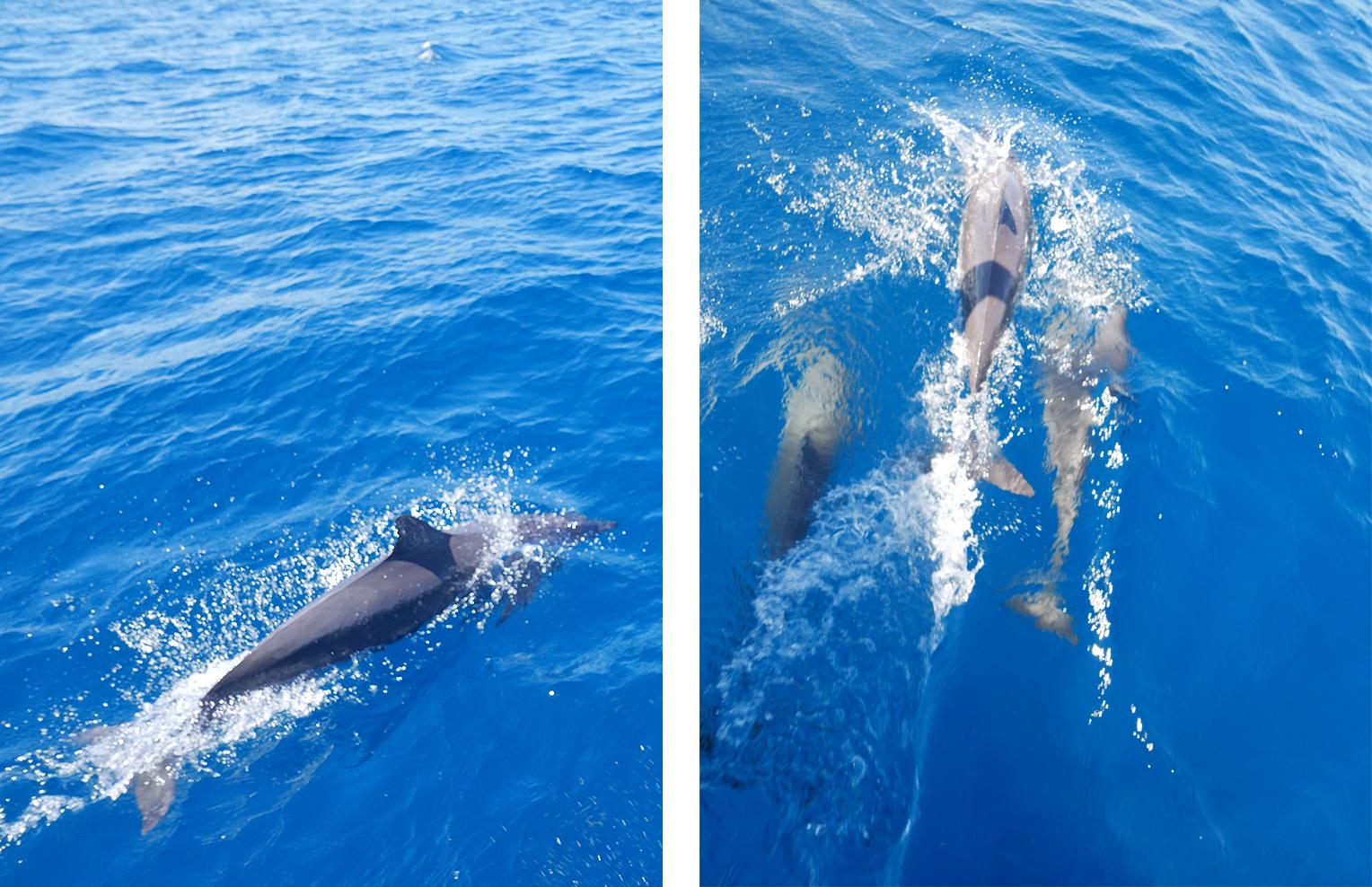 dauphinsBlog