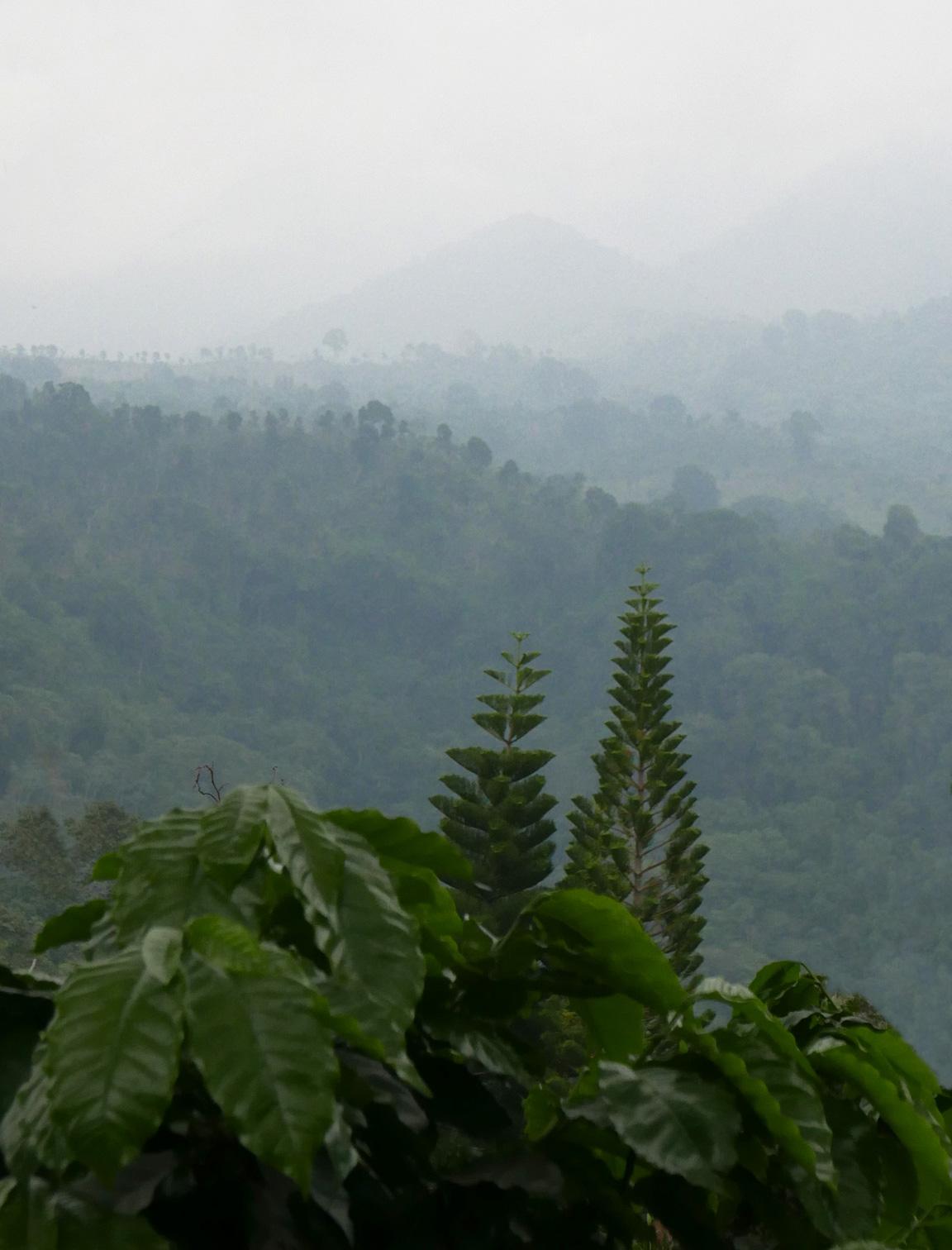 paysage1Bis