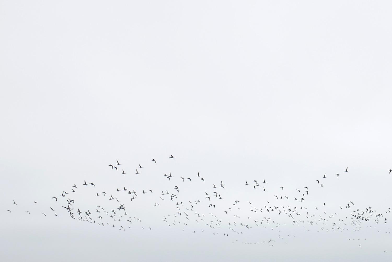 Oiseaux Oleron Miss Etc